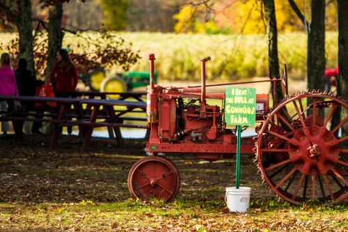 Pumpkin Patch, Pig Races and More at Connor's Farm